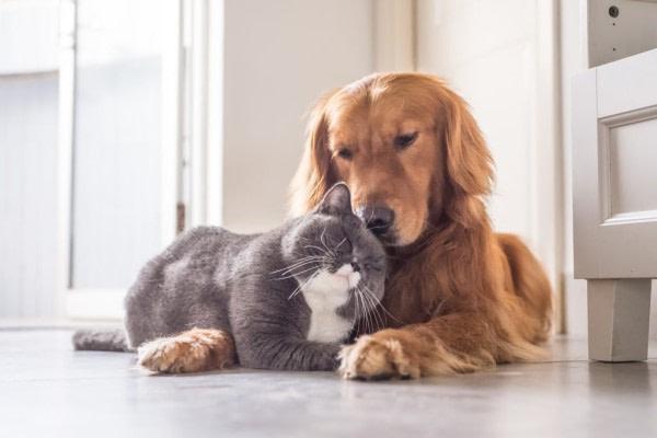 ALCE mascotas seguros particulares